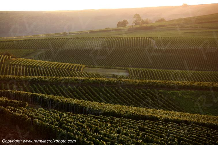 Sancerre vignoble Sancerrois Cher Berry Centre Val de Loire France