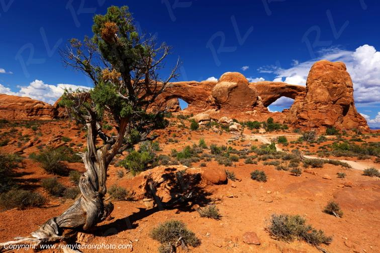 The Windows Arches Arches National Park Utah USA