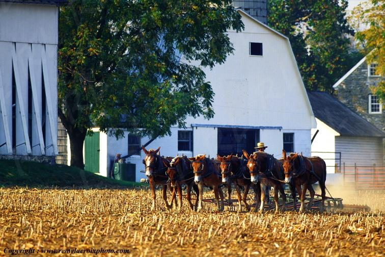 Paysan Amish,Lancaster Dutch County,Pennsylvanie,USA